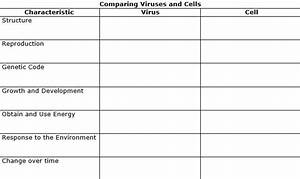 Comparing Virsuses And Bacteria