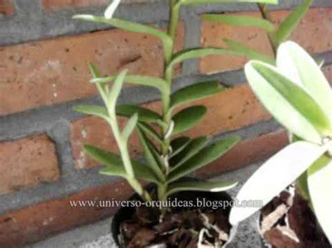 Orquideas A La Venta Doovi