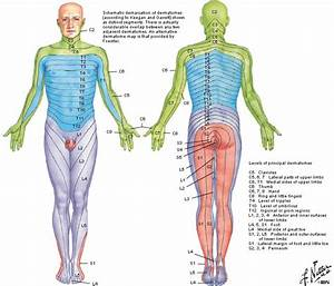 dermatomes - Google Search | Step 1 | Pinterest | Medicine ...