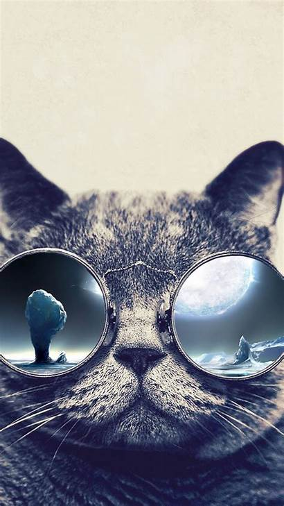 Cool Cat Iphone Wallpapers Glasses Grumpy Background