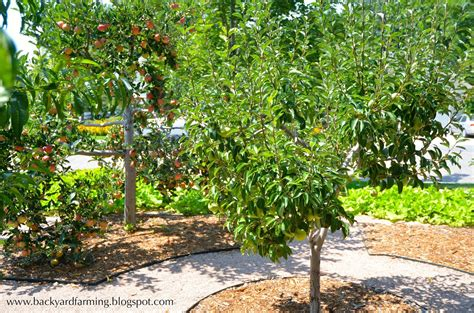 Best Backyard Fruit Trees - backyard farming home orchards