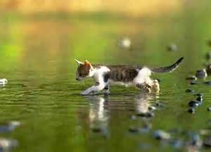 cat water exposing 10 common myths about cats kitty bloger