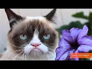 Grumpy Cat and Lil Bub Finally Meet - YouTube