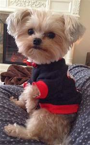 10 Cute Names For Small (Girl) Dogs #yorkie | My Blog ...