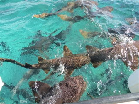 Glass Bottom Boat Tours Belize by Glass Bottom Boat View Picture Of Reef Runner Glass