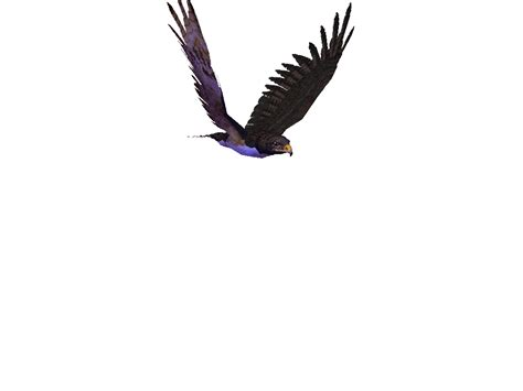 Animated Fly Wallpaper - bird 3d moving wallpaper fruits animated
