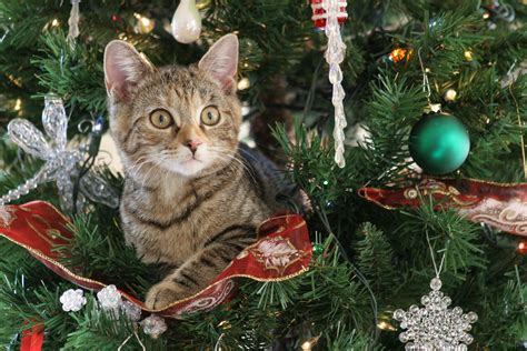 cat christmas tree water do s and don ts joint animal services 5842