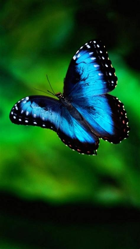3d Wallpapers Butterfly by 3d Butterfly Wallpaper 59 Images