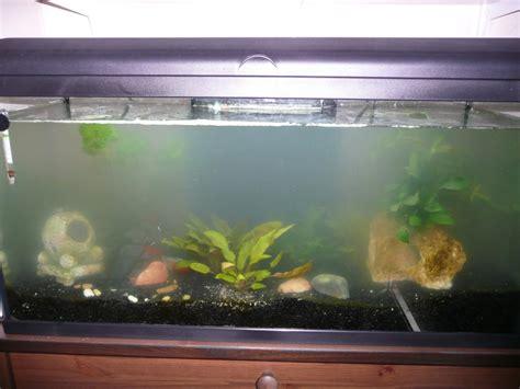 bureau avec tr騁eau eau d aquarium trouble 28 images eau de l aquarium trouble et pr 233 sence d algues aquariumeau douce odeur forum gt message gt eau mon eau