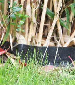 Barrière Anti Rhizome Castorama : limiter les pousses de bambou envahissant ~ Dailycaller-alerts.com Idées de Décoration