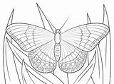 Butterfly Coloring Admiral Pages Printable Butterflies Super Colouring Crafts Supercoloring Print Monarch источник Cartoons Animals Nature sketch template