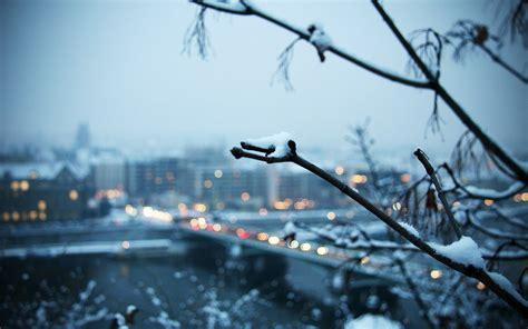 winter landscape trees depth  field snow city