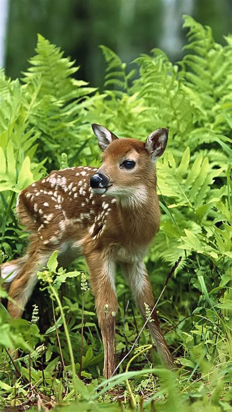 Forest With Animals Wallpaper - wallpaper 1080x1920 a sweet baby deer in the