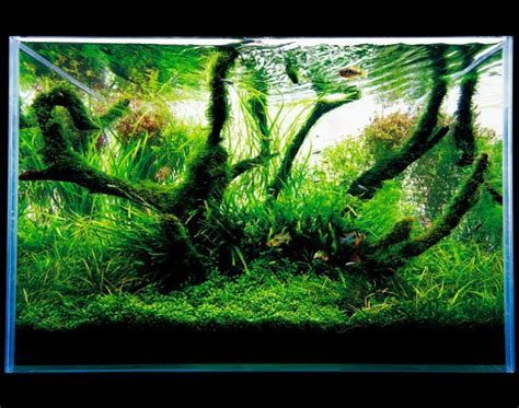 The Green Machine Aquascape by Ada Nature Aquarium Aquascape The Green Machine