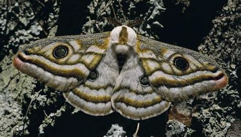 moths  dust   wings animals momme