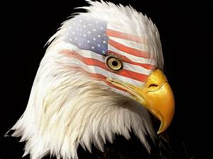 Bald Eagle HD Wallpapers | American Eagle HD Pictures – HD ...