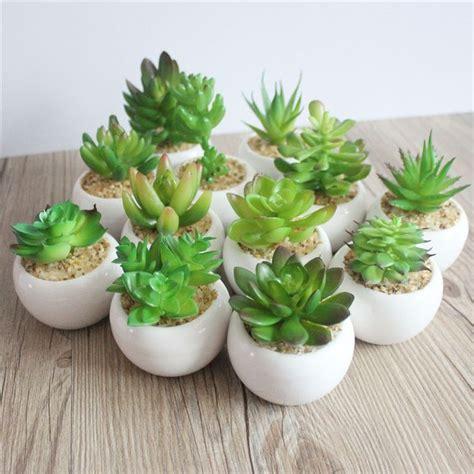 pot bonsai pas cher les 25 meilleures id 233 es concernant bonsai pas cher sur bonsai plante chaussures de