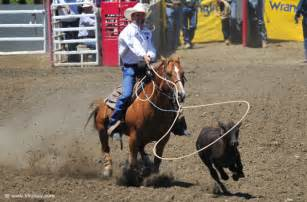 Tie Down Calf Roping Quote
