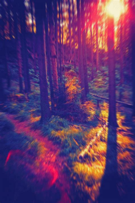 Trippy Forest Tumblr