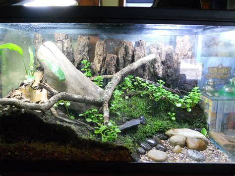 elevage de grenouille en aquarium intra science t 233 moignage 233 levage du t 234 tard 224 la grenouille informations techniques