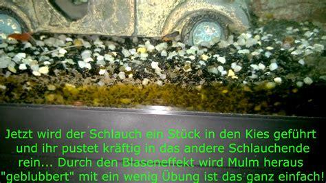 aquarium boden reinigen aquarium boden reinigen anleitung putzen und reinigen vom aquarium wasserbecken aquarium mit
