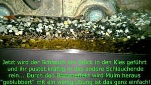 Aquarium Bodengrund Berechnen : bodengrund im aquarium reinigen youtube ~ Themetempest.com Abrechnung