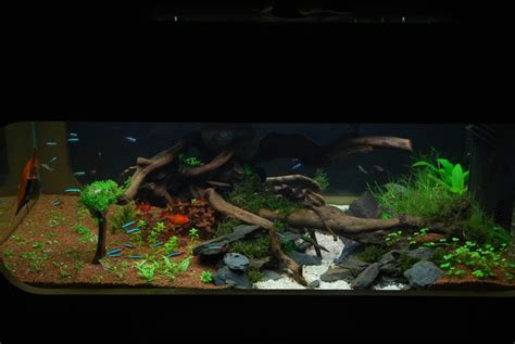 le bon coin aquarium occasion 28 images table basse aquarium bon coin ezooq le bon coin