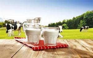 5 Ridiculous Myths About Cow U0026 39 S Milk