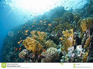 Colourful Underwater Tropical Coral Reef. Stock ...