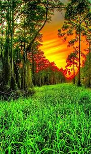 nature wallpaper by _____X - 46 - Free on ZEDGE™