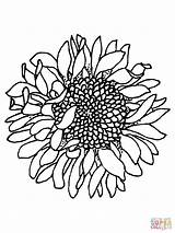 Sunflower Silhouettes Sunflowers Printable Coloring Jooinn Nature Pages Head sketch template