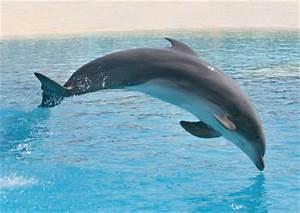 Schöne Delfin Bilder : wildtier lexikon d ein herz f r tiere magazin ~ Frokenaadalensverden.com Haus und Dekorationen