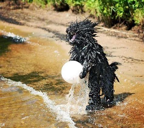 Smieklīgas bildes ar suņiem... ;) - Spoki