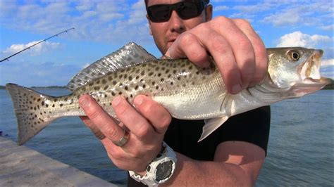 trout sea spotted florida seatrout way catch easy