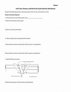 24 1 Reproduction In Flowering Plants Worksheet Answers