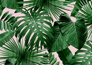 Nice Palm Frond Wallpaper Wild Thing Flavor Paper