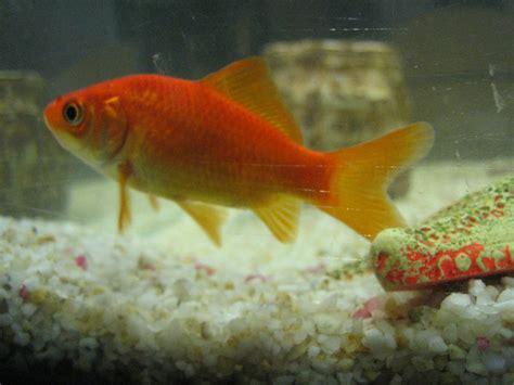 le petit poisson la moyenne section de