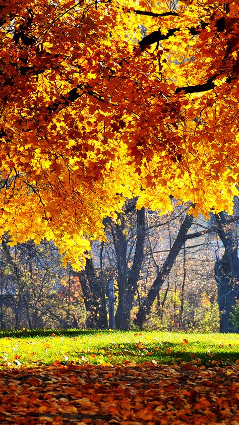 Autumn Wallpapers For Iphone by 25 Fall Iphone Wallpapers