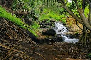 Jungle Stream Kauai Photograph by John Greaves