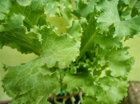 Bakwan jagung punya banyak varian resepnya. Hello Fell: GARDENING # 1 Lihat Kebunku,,