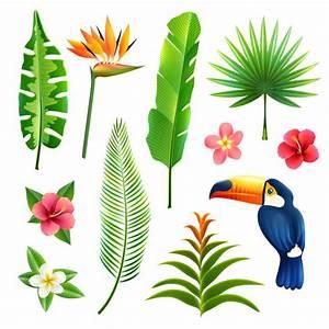 Regenwald Vektoren Fotos Und PSD Dateien Kostenloser