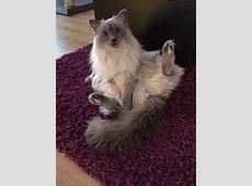Lustige KatzenFotos von unseren Facebook Fans GELIEBTE