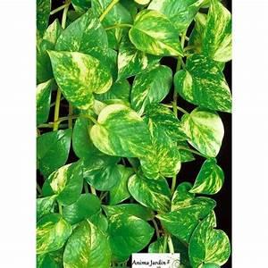 Plantes Vertes D Intérieur Photos : plante verte grimpante interieur ~ Preciouscoupons.com Idées de Décoration