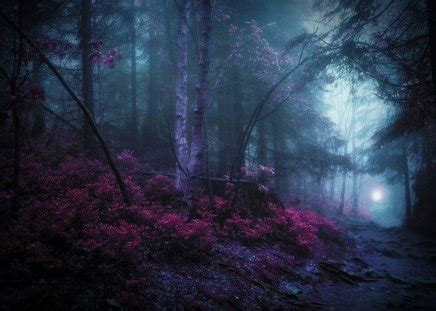 mystic woods forests nature background wallpapers