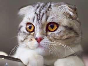 dwarfism  cats   cute til   hurt