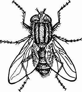 House fly Free vector in Open office drawing svg ( .svg ...