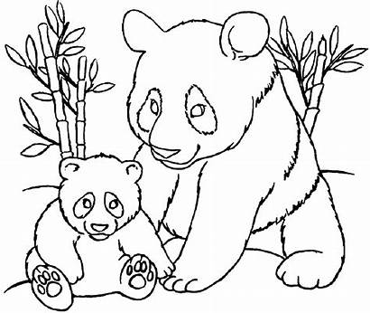 Coloring Pages Pandas Panda Colouring Sheets Sheet