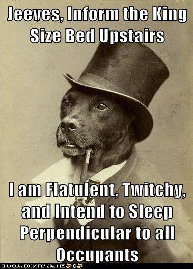 dog everynight  money dog fancy dog funny