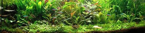 aquarium eau douce debutant aquarium eau douce pour debutant
