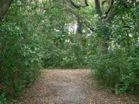 nature trail picture  kendall indian hammocks park miami tripadvisor